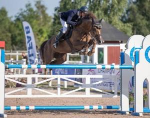 Saluhäst Hästak pandora